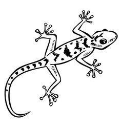 Gecko lizard pattern vector