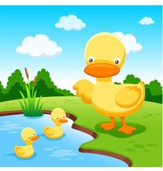 Ducks vector image