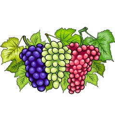 bunches of grapes cartoon vector image vector image