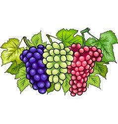 Bunches of grapes cartoon vector