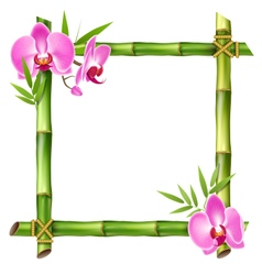 Green bamboo frame with pink orchid flowers vector