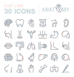 set of line icons of anatomy and physiology vector image vector image