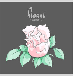 a gentle pink rose vector image