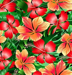 Tropical orange and red variegated hibiscus vector