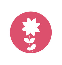 frangipani flower natural icon vector image