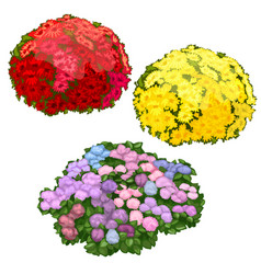 Yellow pink and red flower beds isolated vector