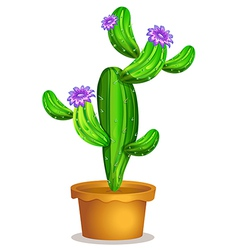 A cactus plant in a pot vector image vector image