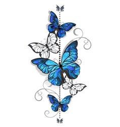 Blue morpho and white butterflies vector