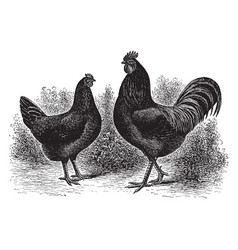 Pair of black javas vintage vector