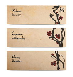 Set of cherry blossom horizontal banners on old vector