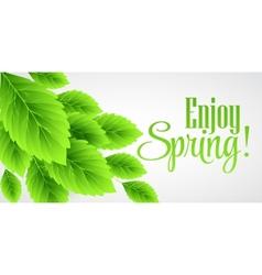 Spring fresh green leaves vector image
