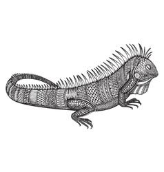 Hand drawn graphic ornate iguana vector image