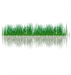 grass in the water vector image