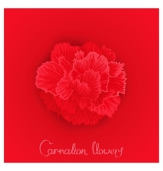 Flower of carnation vector