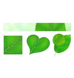 Green leaf texture vector