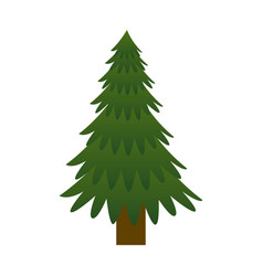 pine tree plant icon vector image
