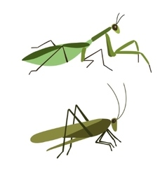 Mantis and grasshopper isolated vector