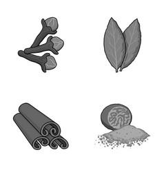 clove bay leaf nutmeg cinnamonherbs and spices vector image