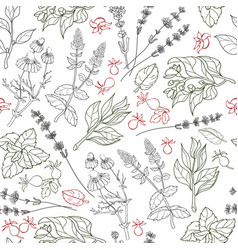 herbs seamless pattern herbal botanical outline vector image vector image