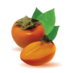 Persimmon with leaves and half persimmon vector