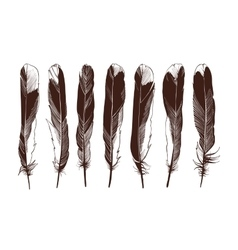 Set of four straight feathers vector image vector image