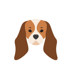 Portrait of cavalier king charles spaniel dog vector