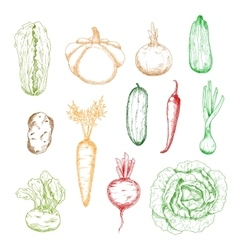 Sketches of isolated farm vegetables vector