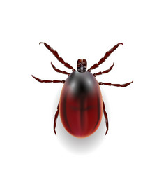 harvest bug on a white background wiht shadow vector image