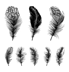 Set of four straight feathers vector image