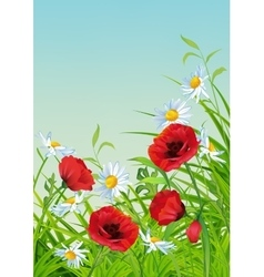 Summer flower flyer vector
