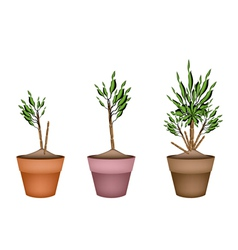 Yucca tree and dracaena plant in flower pots vector