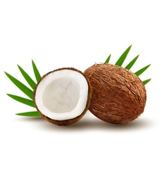 Coconut with leaves vector image vector image