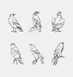 hand-drawn pencil graphics birds of prey set vector image