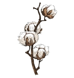 Hand made sketch of cotton plants vector