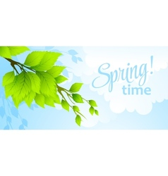Spring fresh green leaves vector