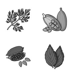 Dill cocoa beans basilherbs and spices set vector