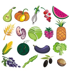 Collection of various fruits and vegetables vector image vector image