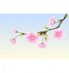 animi spring Sakura vector image