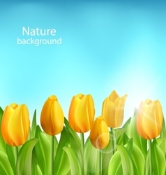 Nature floral background with tulips flowers vector