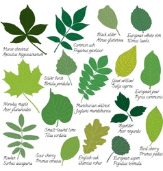 Leaves collection with names vector