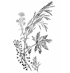 Black and white ink hand drawn wild cereals vector