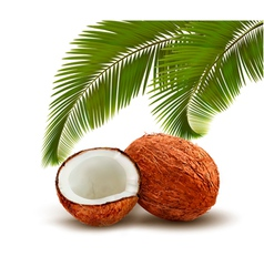 Coconut with palm leaves vector