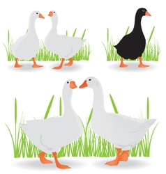geese black and white vector image