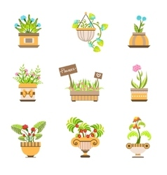 Flowers In Pots Collection vector image vector image
