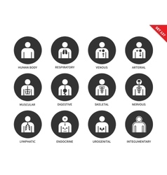 Human Anatomy and Body Systems icons set vector image