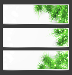 bright shimmering green fir tree branches flyer vector image