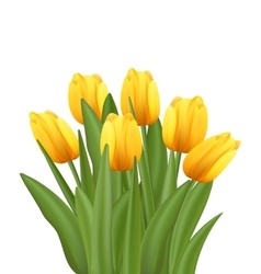 Beautiful bouquet with yellow tulips flowers vector