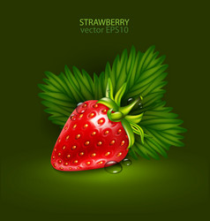 Red berry of a ripe strawberry with leaves on a vector