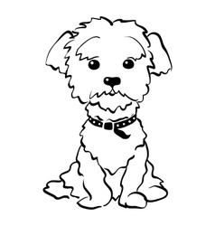 sketch funny maltese dog sitting vector image vector image