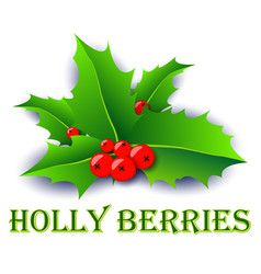 holly berries xmas poster vector image